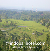 rice terrace at jatiluwih village bali